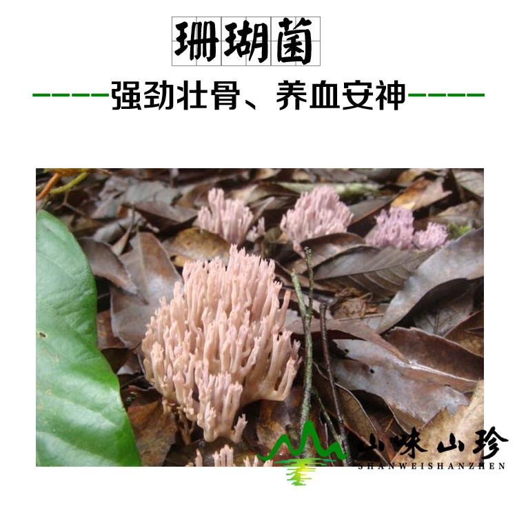 新鲜珊瑚菌
