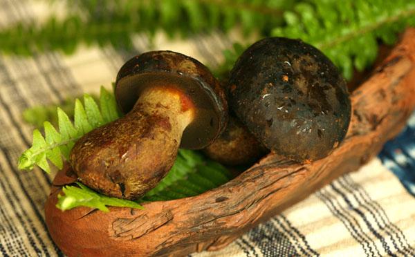 黑牛肝菌怎么吃