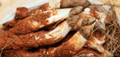鸡枞菌如何保存