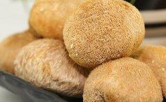 孕妇能吃猴头菇吗