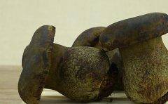 黑牛肝菌是什么