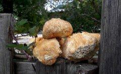 干猴头菇为什么煮不烂是方法用错