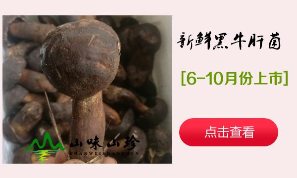 新鲜黑牛肝菌