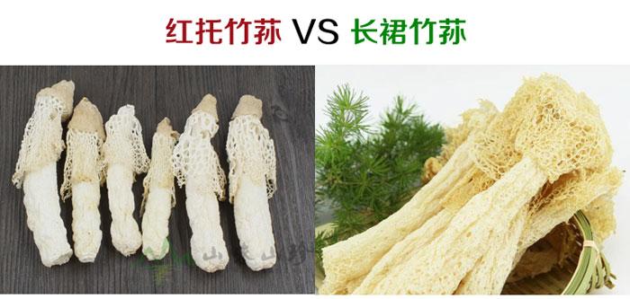 短裙竹荪和长裙竹荪对比