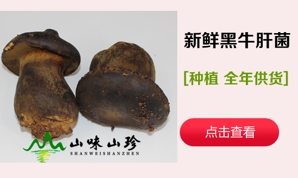 种植新鲜黑牛肝菌