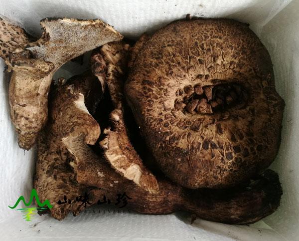 新鲜黑虎掌菌打包
