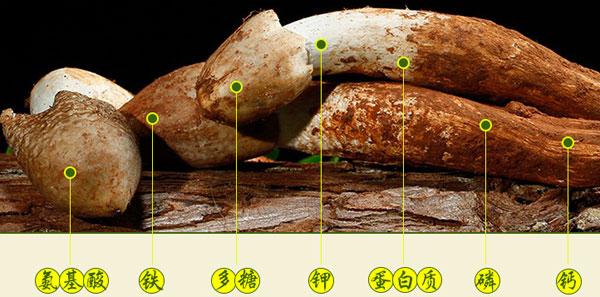鸡枞菌的营养功效