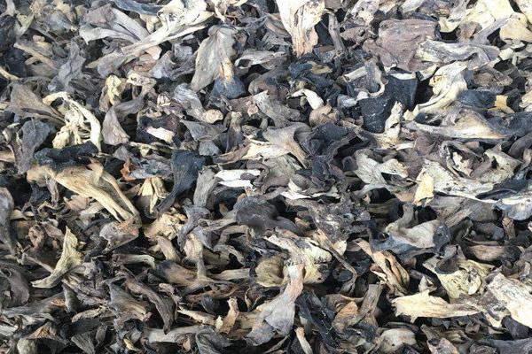 酸菜炒黑喇叭菌的功效作用与营养价值